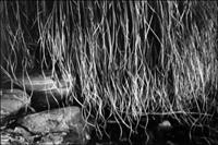 A magnificent study of rocks and grasses.  An exemplary photograph printed on Agfa Rapid Portriga.